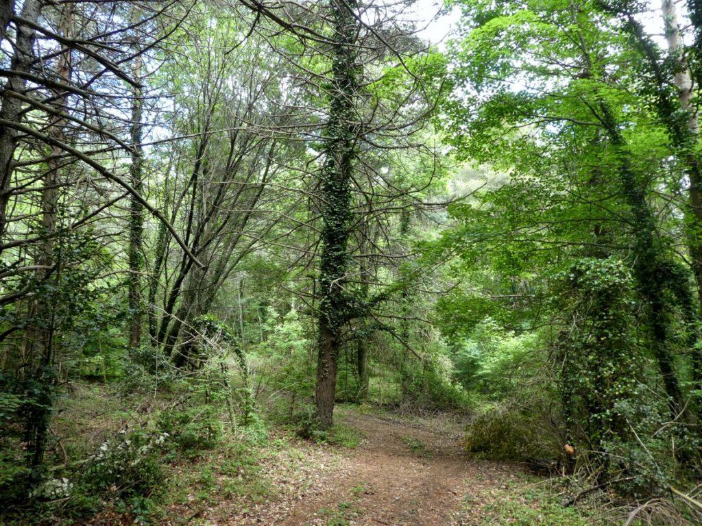 Caminant pel bosc